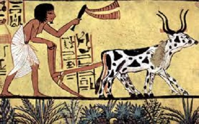 history ofmankind